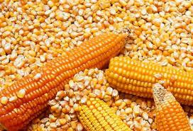 precio del maiz