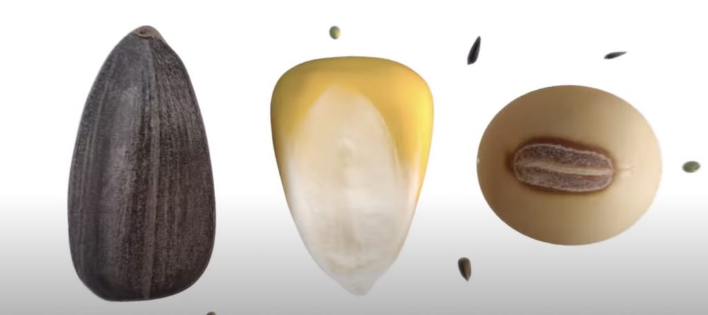 nk semillas argentina maiz soja girasol
