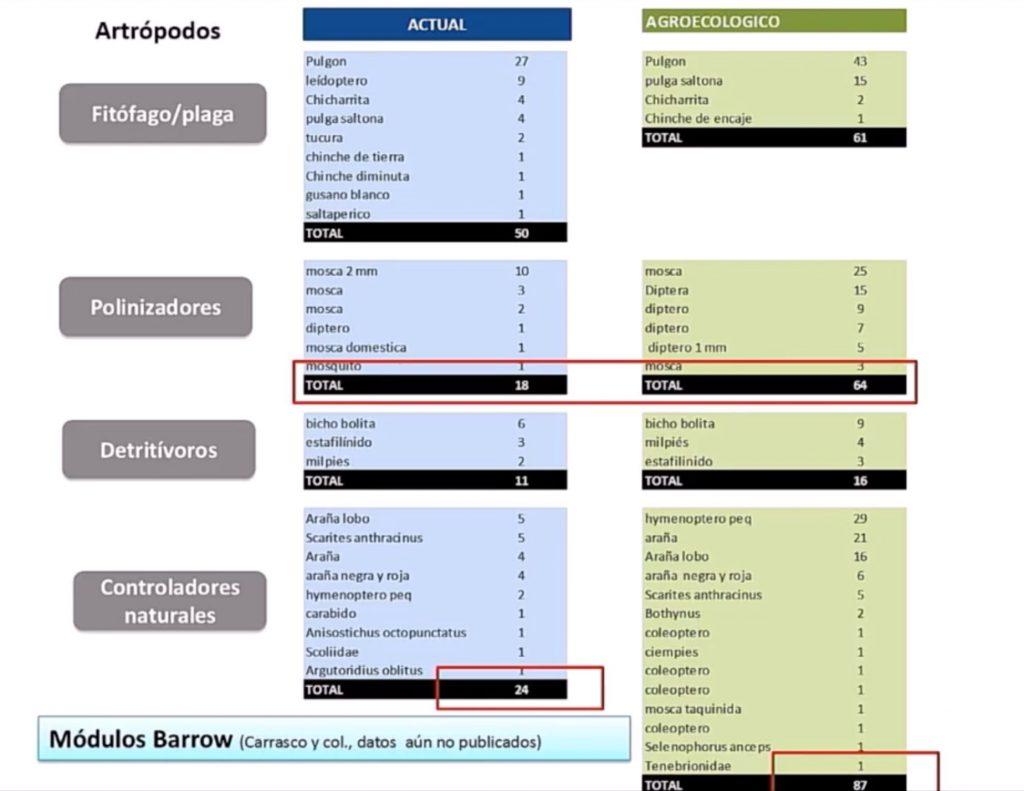 control ecologico de plagas insecticida organico