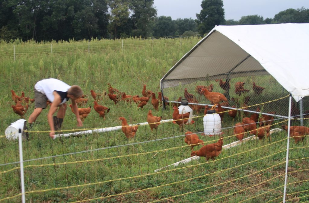 pollo pastoril red electrica chicken tractor