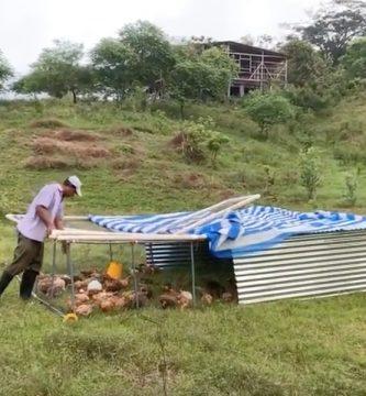 pollo pastoril tropical viteri ecuador