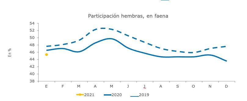 faena de hembras argentina 2021