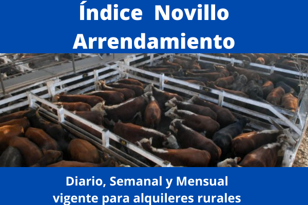Indice Novillo Arrendamiento Mercado de Liniers